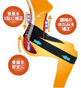 ラクナールはこれ一つで1.腰椎のゆがみを補正、2.背骨をS字型に補正、3.骨盤を安定にいたします。