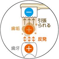 プラスに荷電している歯垢が、マイナスに帯電したブラシに引っ張れる